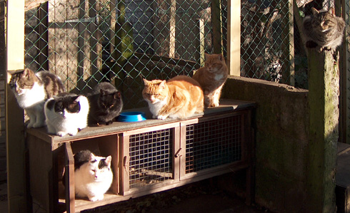 A group of FIV cats in the sanctuary