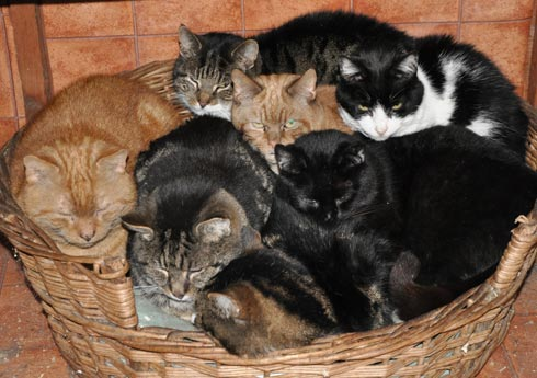 seven FIV cats sharing a large dog bed