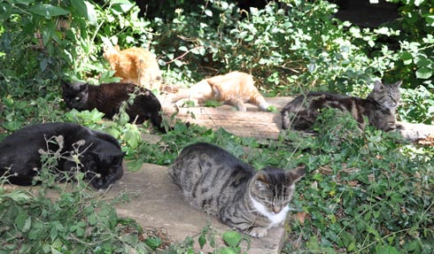a group of cats spread out on the Fivery planks